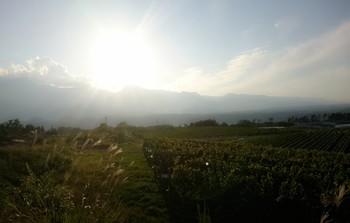 ブドウ畑 2017 陽が沈む.jpg